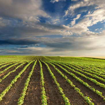 Census of Agriculture seeks to shape the future
