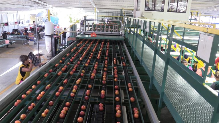 produce shipping inventory